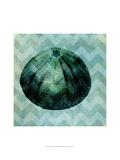 Chevron Shell IV Kunstdrucke von  Vision Studio