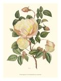 Vintage Roses IV Kunst von  Vision Studio