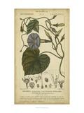 Floral Botanica I Arte por  Turpin