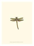 Miniature Dragonfly I Giclée-Premiumdruck von  Vision Studio