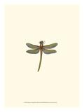 Miniature Dragonfly II Giclée-Premiumdruck von  Vision Studio