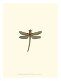 Miniature Dragonfly II Posters by  Vision Studio