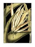 Tranquil Tropical Leaves III Arte por  Vision Studio