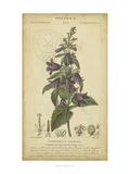 Floral Botanica IV Pôsteres por  Turpin