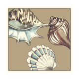 Shell Trio on Khaki III Prints by Megan Meagher