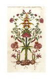 Botanical Hybrid I Art par Naomi McCavitt