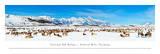 National Elk Refuge - Jackson Hole, Wyoming Plakater av James Blakeway