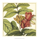 Tropical Blooms and Foliage III Posters by Jennifer Goldberger