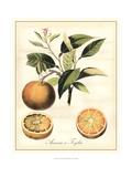 Tuscan Fruits III Prints by  Vision Studio