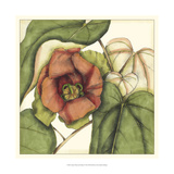 Tropical Blooms and Foliage IV Posters by Jennifer Goldberger