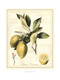 Tuscan Fruits II Affiches van  Vision Studio