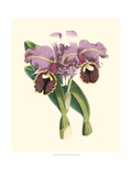 Magnificent Orchid II Prints by  Vision Studio