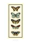Butterfly Collector VI Posters by Chariklia Zarris