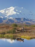 Mt. Mckinley, Denali National Park, Alaska, USA Premium fotografisk trykk av Hugh Rose
