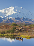 Mt. Mckinley, Denali National Park, Alaska, USA Photographic Print by Hugh Rose