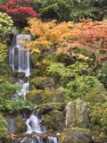 Heavenly Falls and Autumn Colors, Portland Japanese Garden, Oregon, USA Fotoprint av William Sutton