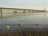 Mackinac Bridge, Mackinaw City, Michigan, USA Photographic Print by Peter Hawkins