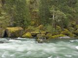 The Umpqua River, Oregon, USA Fotoprint av William Sutton
