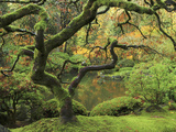Portland Japanese Garden in Early Autumn: Portland Japanese Garden, Portland, Oregon, USA Photographic Print by Michel Hersen