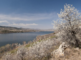 Serviceberry, Horsetooth Reservoir, Fort Collins, Colorado, USA Fotografisk trykk av Trish Drury