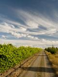 Vineyard and Road, Walla Walla, Washington, USA Reproduction photographique par Richard Duval