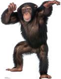 Young Chimpanzee Lifesize Standup Cardboard Cutouts