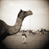 Camel Fair in Pushkar, India Reproduction photographique par Theo Westenberger