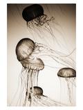 Jellyfish in Motion 2 Fotografie-Druck von Theo Westenberger