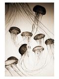 Jellyfish in Motion 3 Fotografie-Druck von Theo Westenberger
