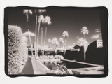 Palm Springs 6 Reproduction photographique par Theo Westenberger