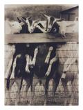 Goat Chorus Line Fotografisk tryk af Theo Westenberger