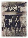 Goat Chorus Line Photographic Print by Theo Westenberger