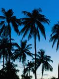 Palm Trees Silhouetted at Night, Sengiggi Beach, Lombok, Indonesia, Southeast Asia, Asia Fotografisk trykk av Matthew Williams-Ellis