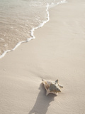 Conch Shell Washed Up on Grace Bay Beach, Providenciales, Turks and Caicos Islands, West Indies Fotografisk tryk af Walker, Kim