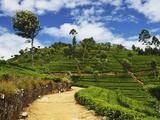 View of Tea Plantations from Lipton's Seat, Haputale, Sri Lanka, Asia Photographic Print by Jochen Schlenker