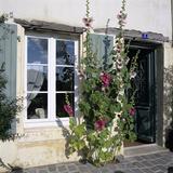 Typical Scene of Shuttered Windows and Hollyhocks, St. Martin, Ile de Re, Poitou-Charentes, France Reproduction photographique par Stuart Black