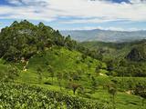 View of Tea Plantations from Lipton's Seat, Haputale, Sri Lanka, Asia Fotografie-Druck von Jochen Schlenker