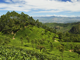 View of Tea Plantations from Lipton's Seat, Haputale, Sri Lanka, Asia Photographic Print by Jochen Schlenker