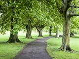 Spring Trees on the Stray in Spring, Harrogate, North Yorkshire, Yorkshire, England, UK, Europe Photographic Print by Mark Sunderland