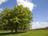Spring Trees in Jacob Smith Park, Knaresborough, North Yorkshire, England, United Kingdom, Europe Photographic Print by Mark Sunderland