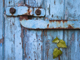 Ivy (Hedera Sp) Growing on Old Barn Door, Scotland, United Kingdom, Europe Fotografisk tryk af Ann & Steve Toon