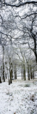 Light Dusting of Dnow in English Woodland, West Sussex, England, United Kingdom, Europe Reproduction photographique par Giles Bracher