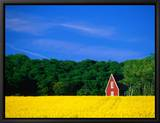 Rape Field, Red House and Forest, Kullaberg Skane, Kullaberg, Skane, Sweden Framed Canvas Print by Anders Blomqvist