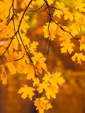 Orange Leaves Fotografie-Druck von Art Wolfe