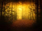 Morning Forest Reproduction photographique par Philippe Manguin