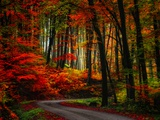 Colorful Way Fotoprint van Philippe Sainte-Laudy