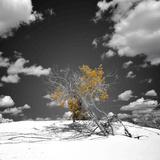 De boom die niet wilde sterven Fotoprint van Philippe Sainte-Laudy