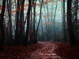 The Path Not Take Photographic Print by Philippe Manguin