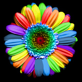 Rainbow Flower Fotografisk tryk af Magda Indigo