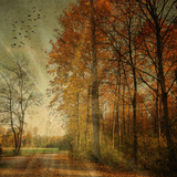 Herfststralen Fotoprint van Philippe Sainte-Laudy